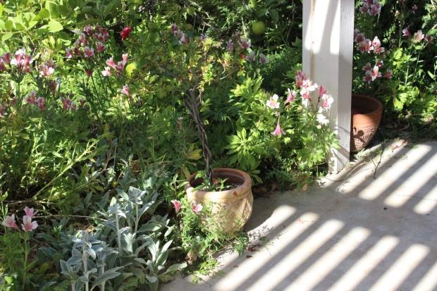 17 garden 1