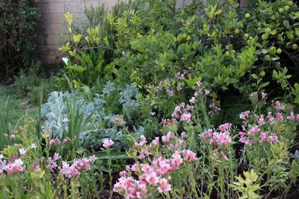 17 garden after 6